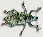 Farrell Lab - Entomology at Harvard University